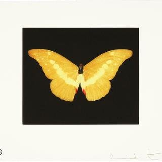 Damien Hirst - To Lure, Print