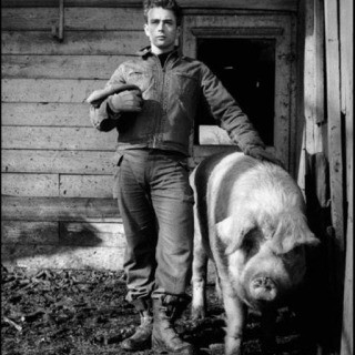 "USA. Fairmount, Indiana. 1955. James Dean on the farm of his uncle Marcus Winslow, posing with a pig asking himself ""do I belong to the animals, to the pigs, the cattle, or the goats?"", by Dennis Stock"