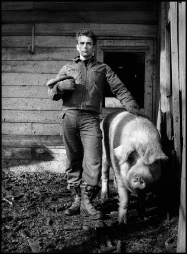 "Dennis Stock, USA. Fairmount, Indiana. 1955. James Dean on the farm of his uncle Marcus Winslow, posing with a pig asking himself ""do I belong to the animals, to the pigs, the cattle, or the goats?"""