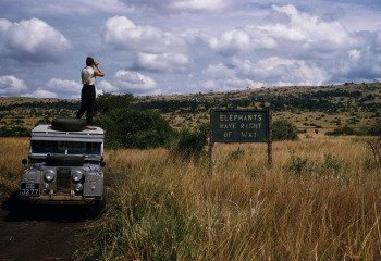 Uganda. 1958. Queen Elizabeth National Park. 'Elephants have Right Of Way' sign on crater lake track in the Queen Elizabeth National Park., by George Rodger