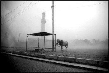 Baghdad. May 13, 2008. A horse is tied to an electricity post during a sandstorm in the Sadr City district of Baghdad., by <a href='/site-admin/artists/artist/1122'>Moises Saman</a>