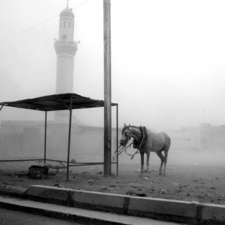 Baghdad. May 13, 2008. A horse is tied to an electricity post during a sandstorm in the Sadr City district of Baghdad. art for sale