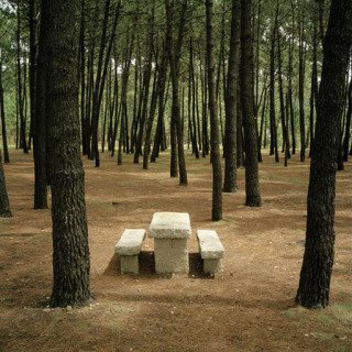 Spain. Galicia. A forest adjoining the beach near Muxia, with picnic facilities. 1998 art for sale