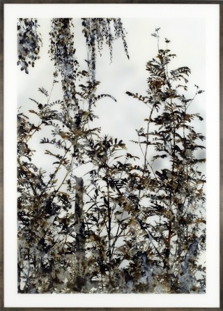 Stefan Sehler Untitled (Marsh II) art for sale