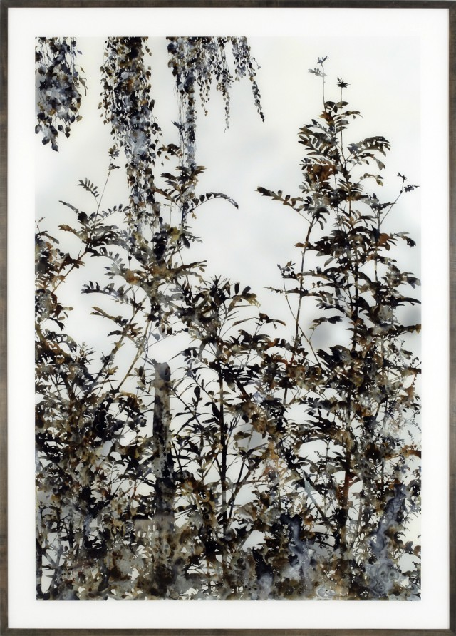 Stefan Sehler, Untitled (Marsh II)