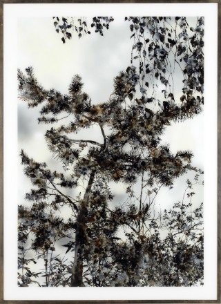 Stefan Sehler Untitled (Marsh III) art for sale