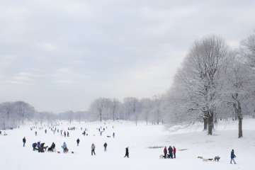 Prospect Park 02.11.2010, by &lt;a href=&#39;/site-admin/artists/artist/222&#39;&gt;Todd Matarazzo&lt;/a&gt;